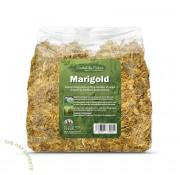 Marigold 金盞花