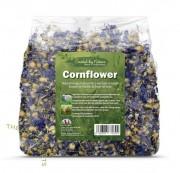 Cornflower  矢車菊